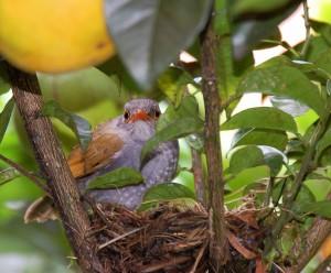 Panama homes birdwatching Boquete