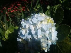 bgi flower 1